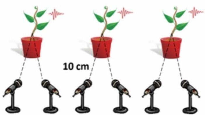 Sons des plantes